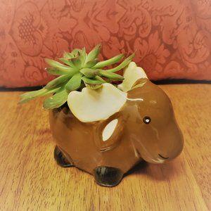 Ceramic Moose Planter with Echeveria Succulent